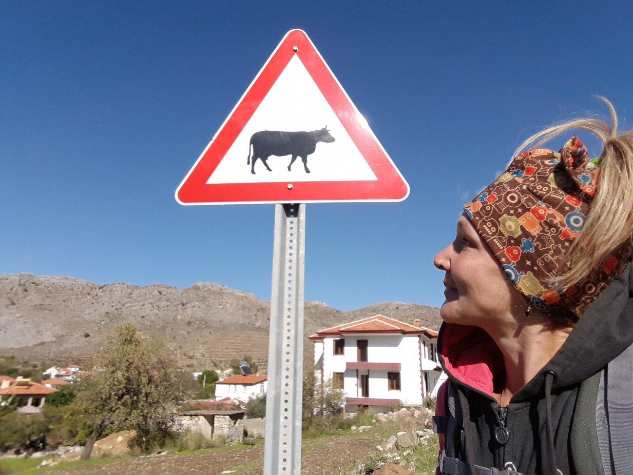 Дорожный знак корова