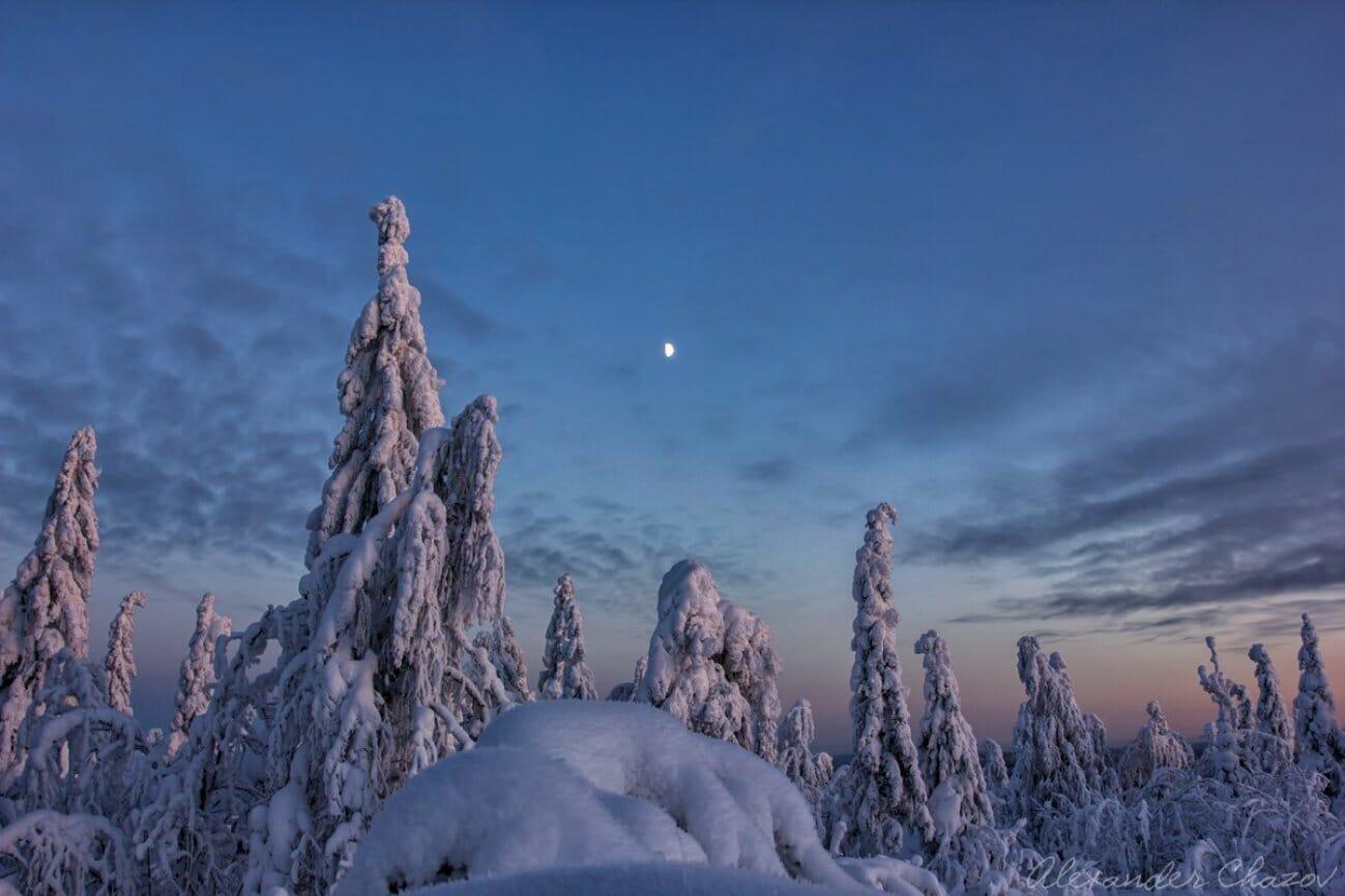 Луна вечером над снежными верхушками елок