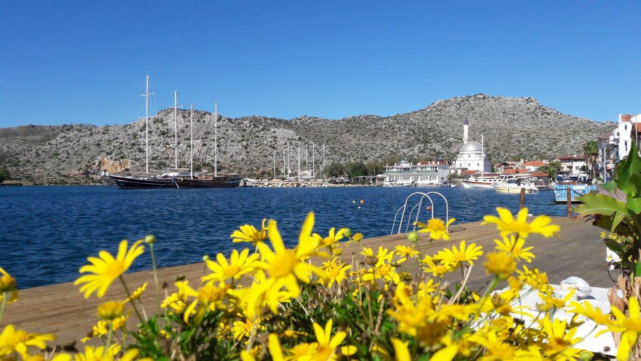 Море и желтые цветы