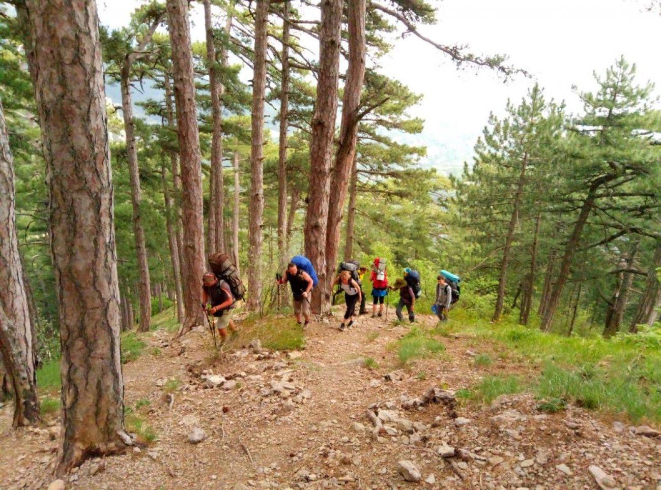 Подъем туристов в гору по лесу
