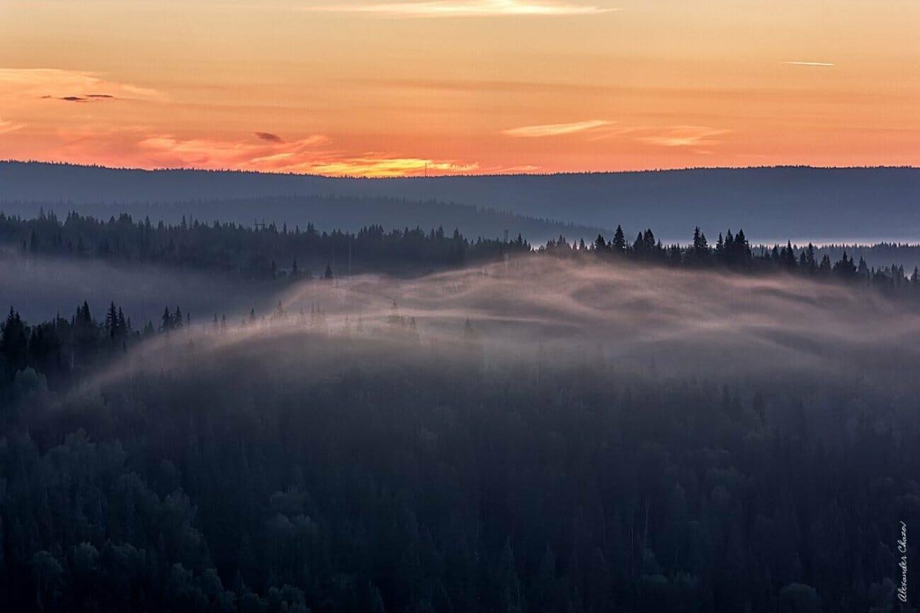 Туманная лесная долина в закате