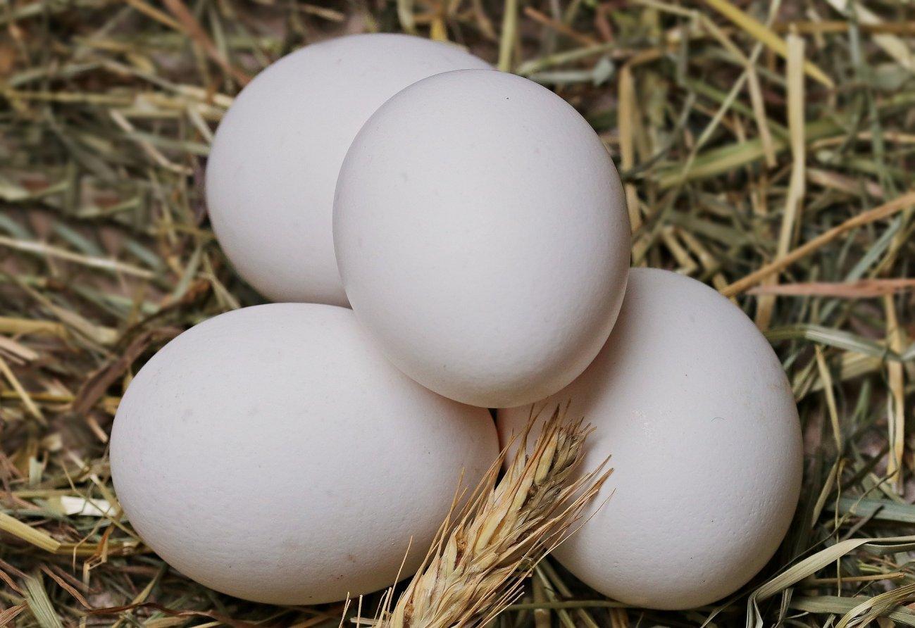 Вареные куриные яйца для туристического похода