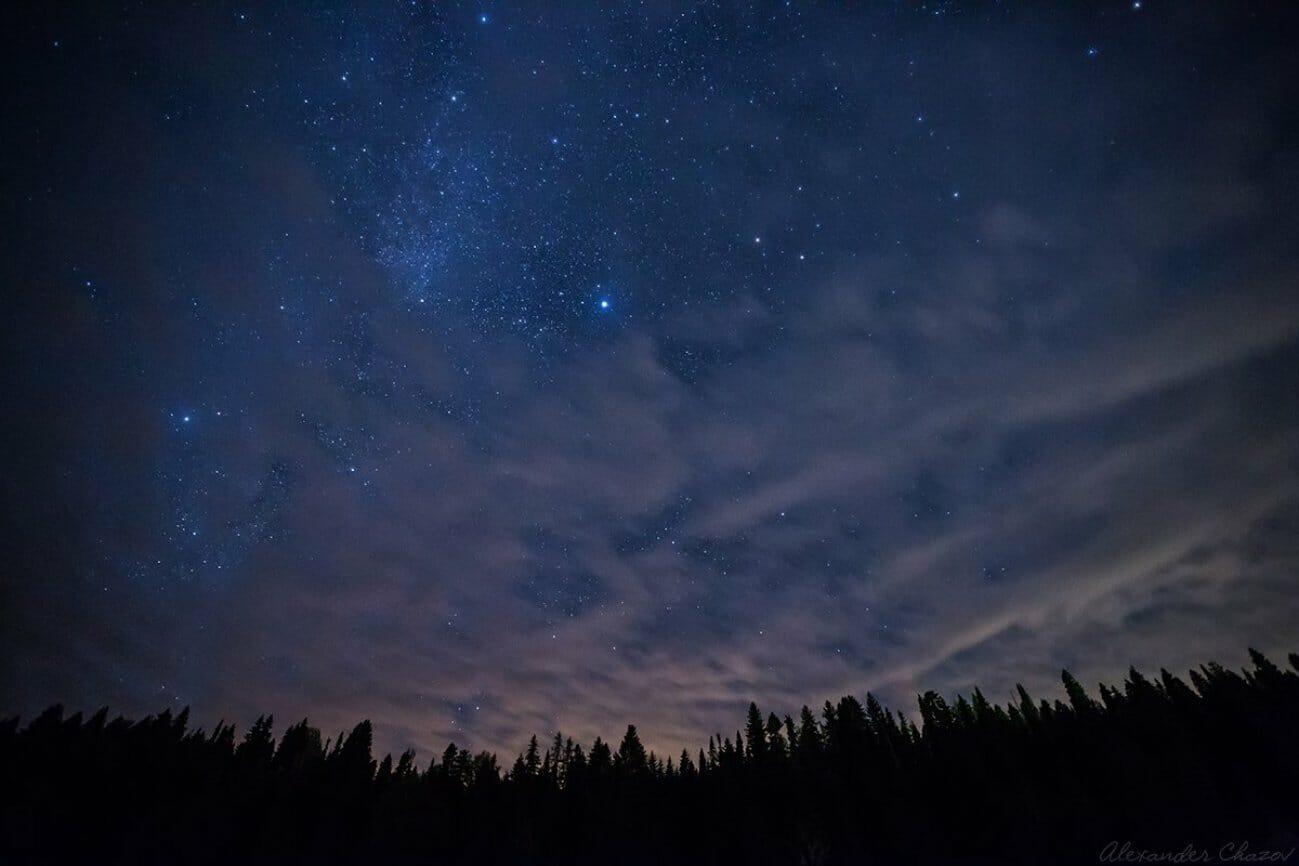Одинокие звезды над ночным лесом