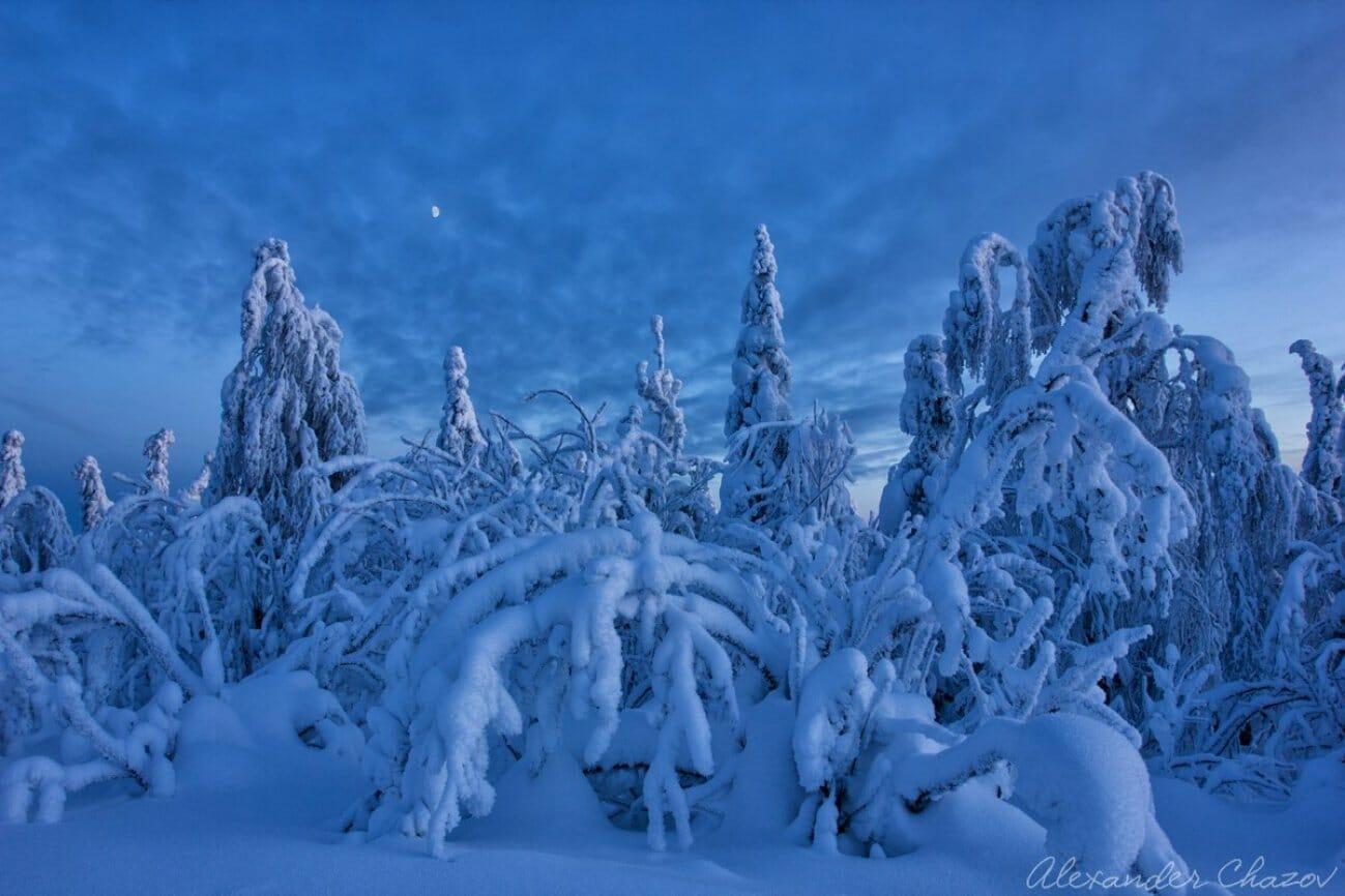 Снежная тайга глубоко в лесах