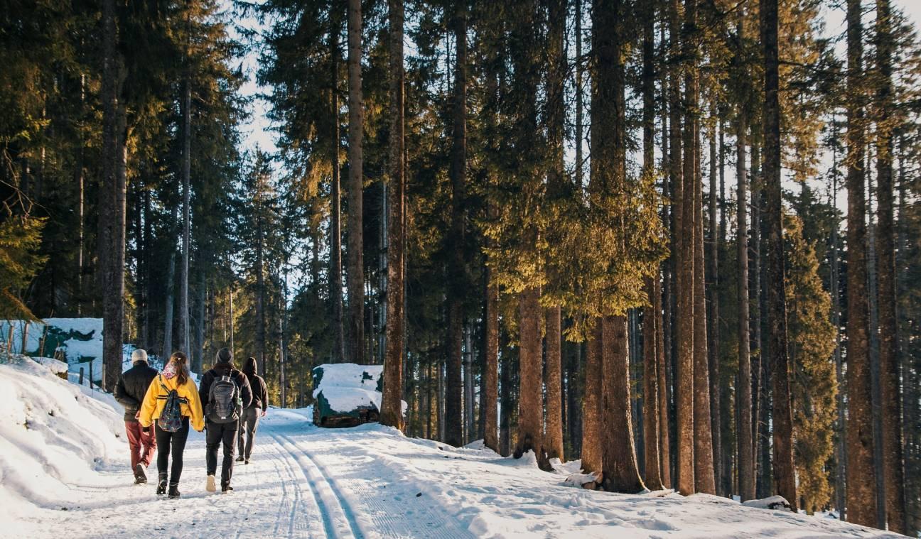Путешествие туристов по лесу