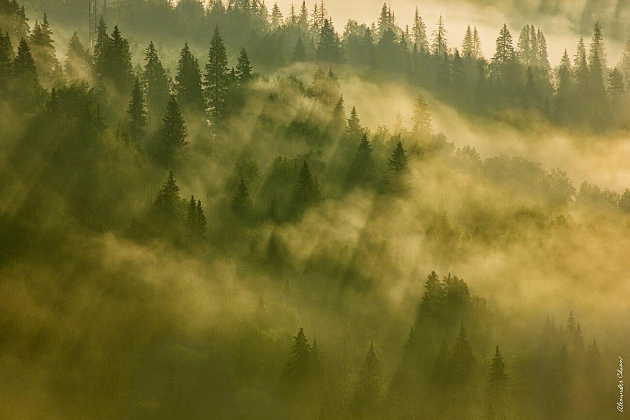 Лесная долина в тумане