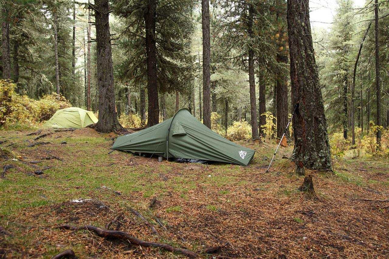 Туристическая палатка в лесу на Алтае