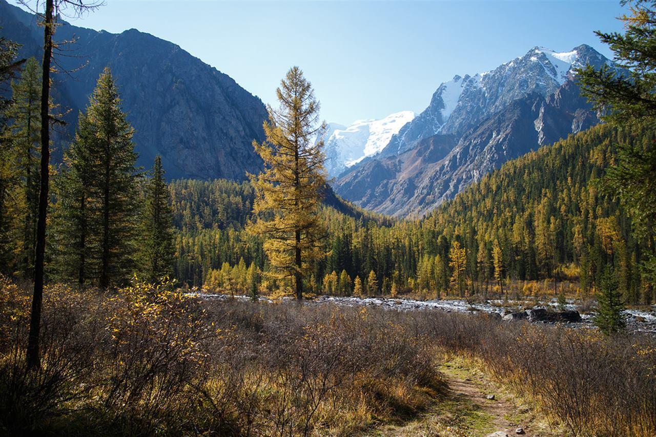 Осенний лес и горы Алтая