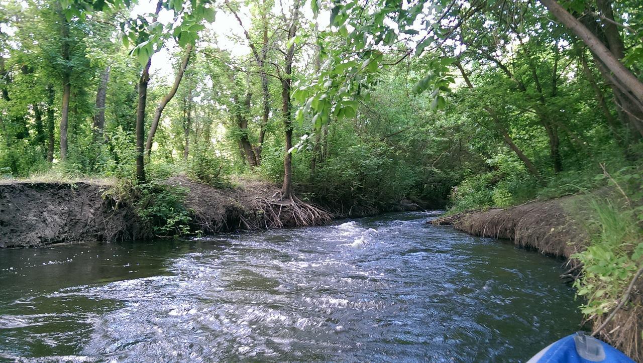Небольшая речка в лесу