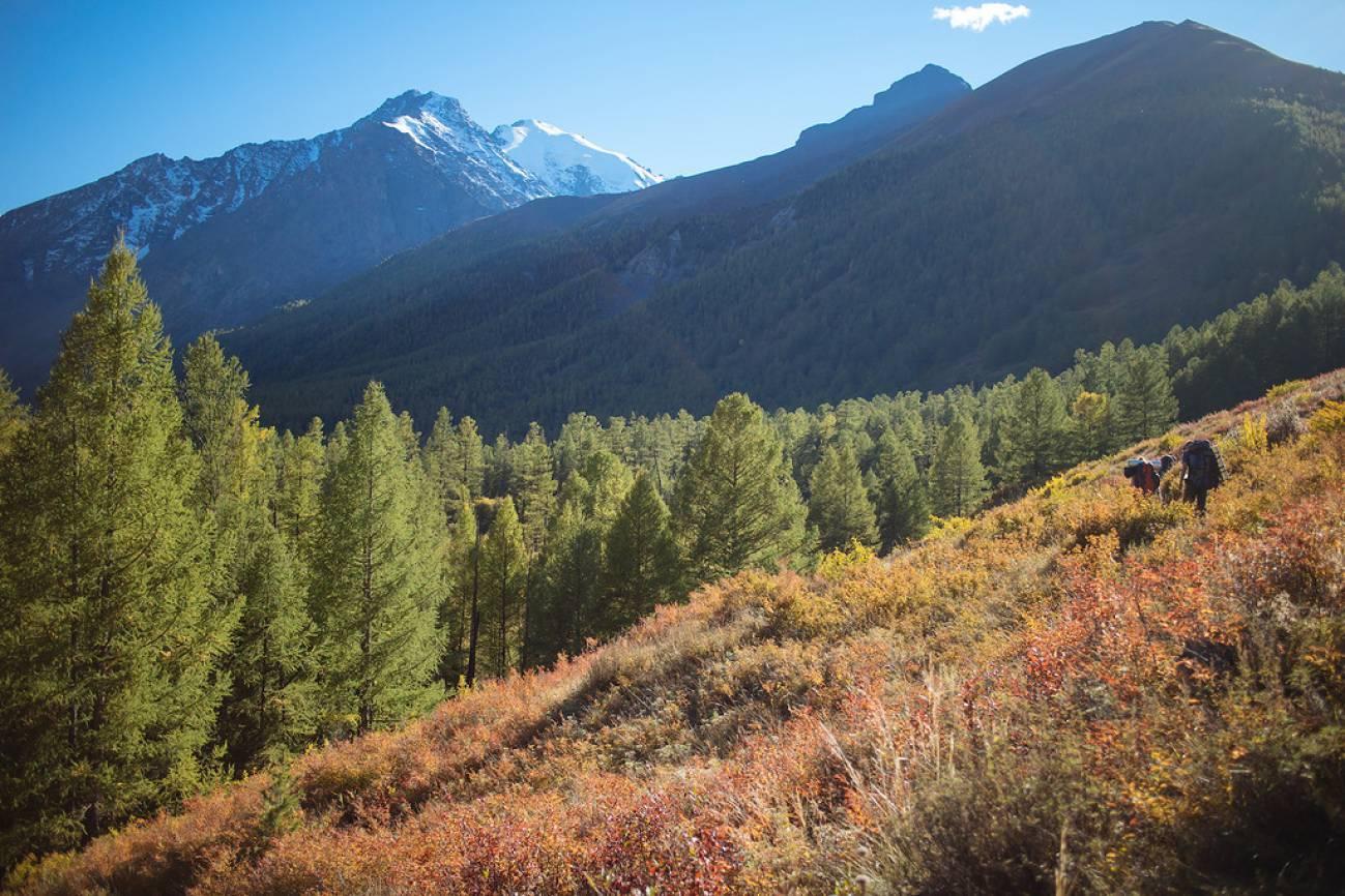 Высокогорные ели и заснеженные пики гор