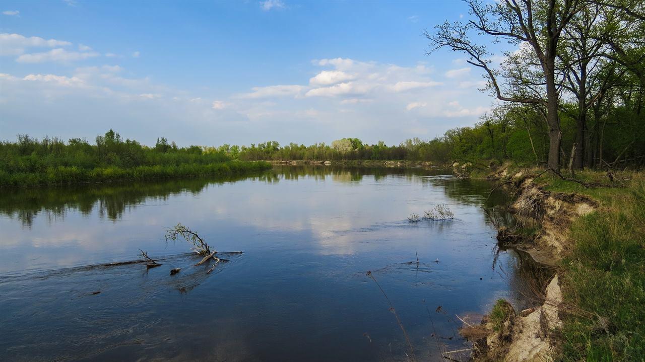 Река и ветки в воде