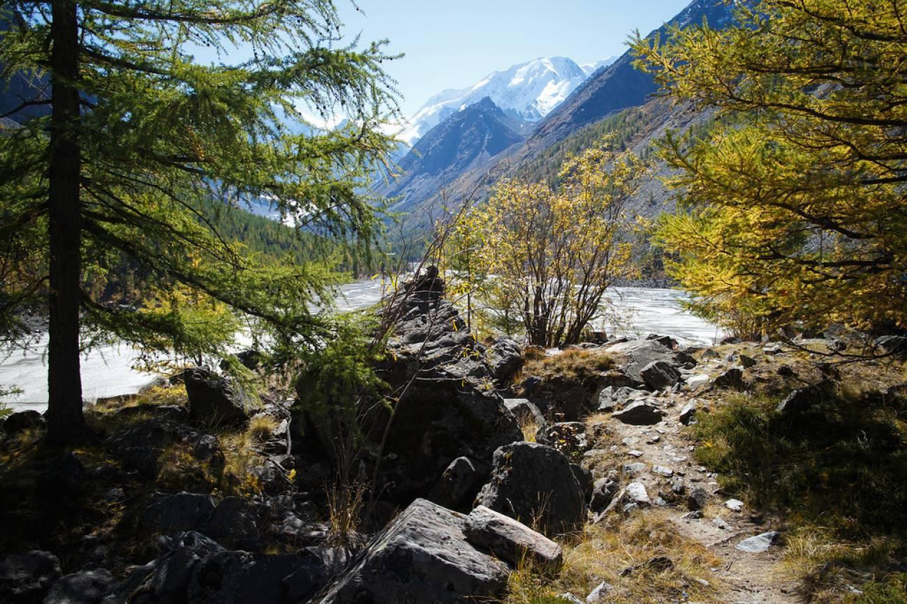 Лес, горы и бурная река в горах