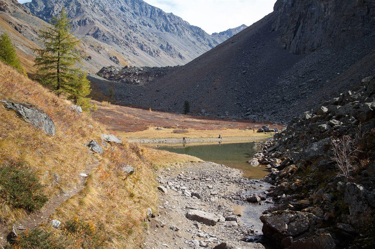 Долина Алтая и деревья