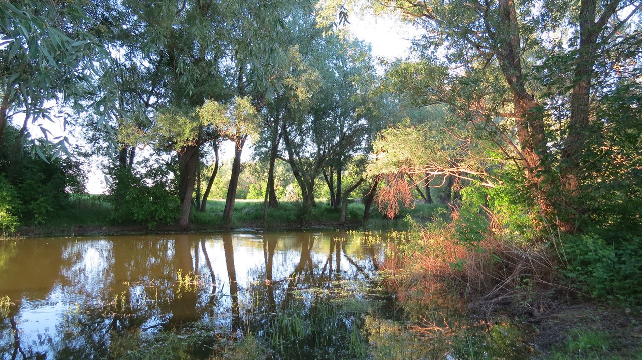 Спокойная речка в лесу между деревьев
