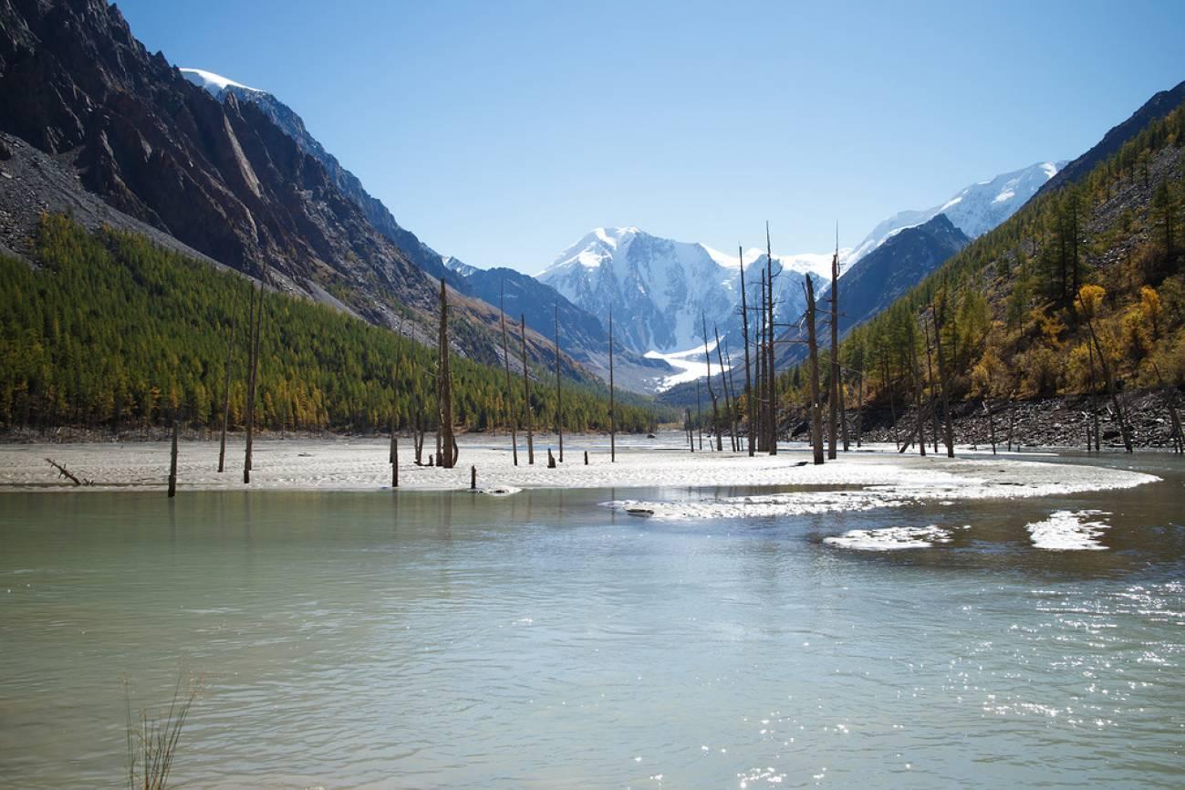 Старые высохшие деревья стоят в высокогорном озере