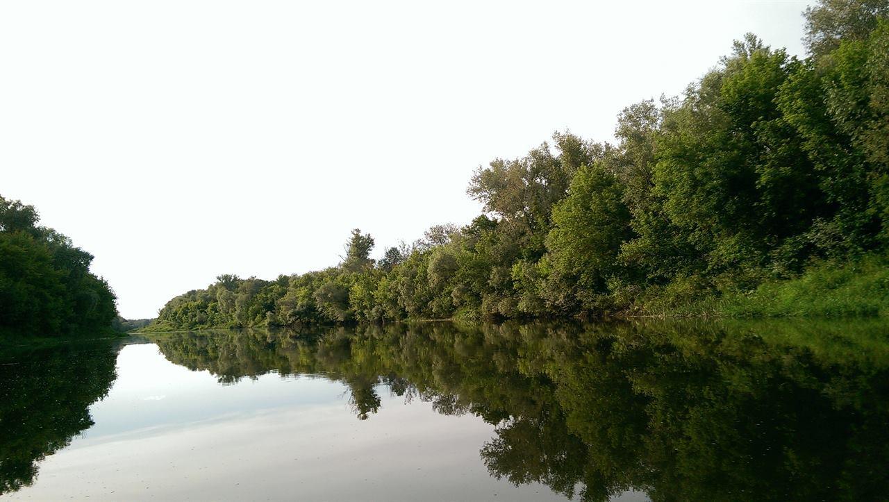 Река и берег из деревьев