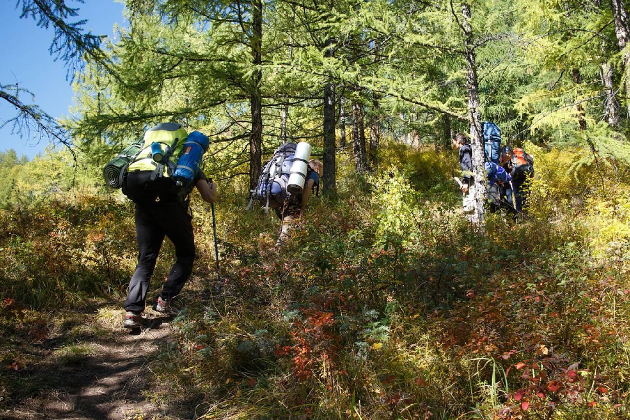 Путешественники с большими рюкзаками поднимаются через лес в гору