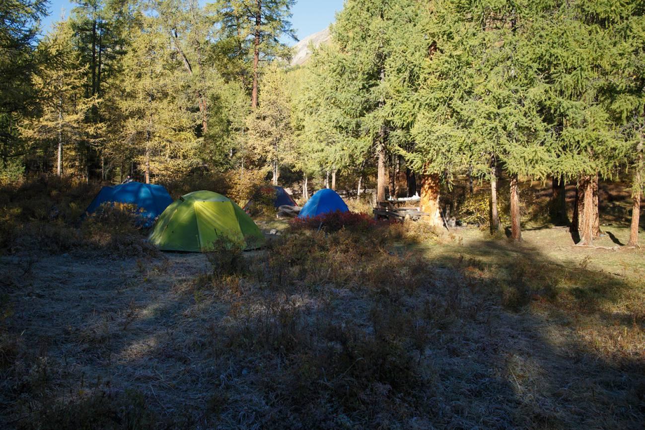 Палатки в туристическом лагере в лесу