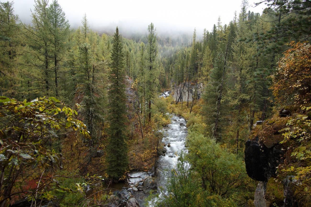 Горный ручей начинает свой путь в лесу
