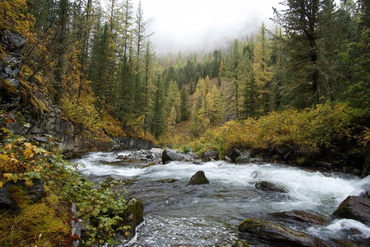 Горная река в лесу с небольшими порогами и камнями