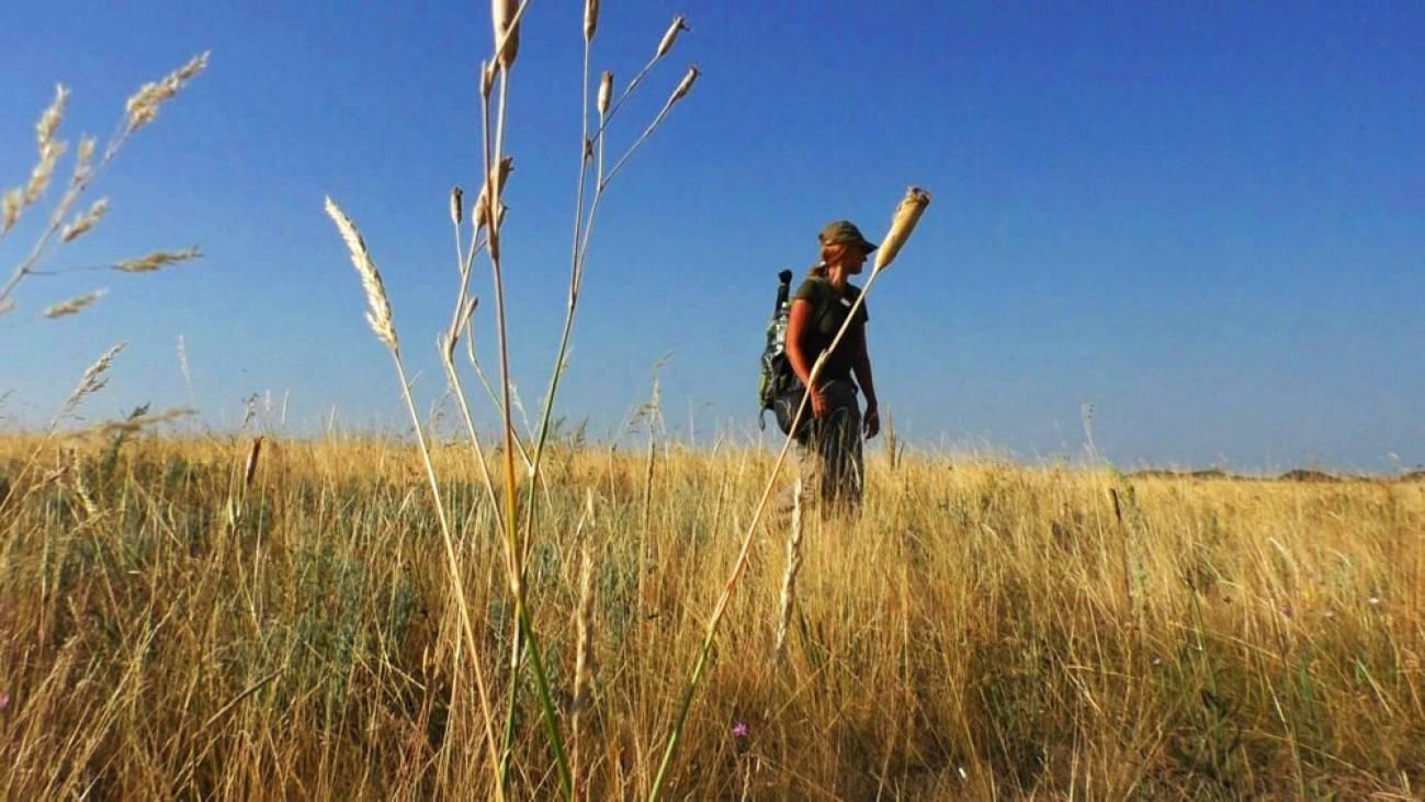 Путешественница в поле