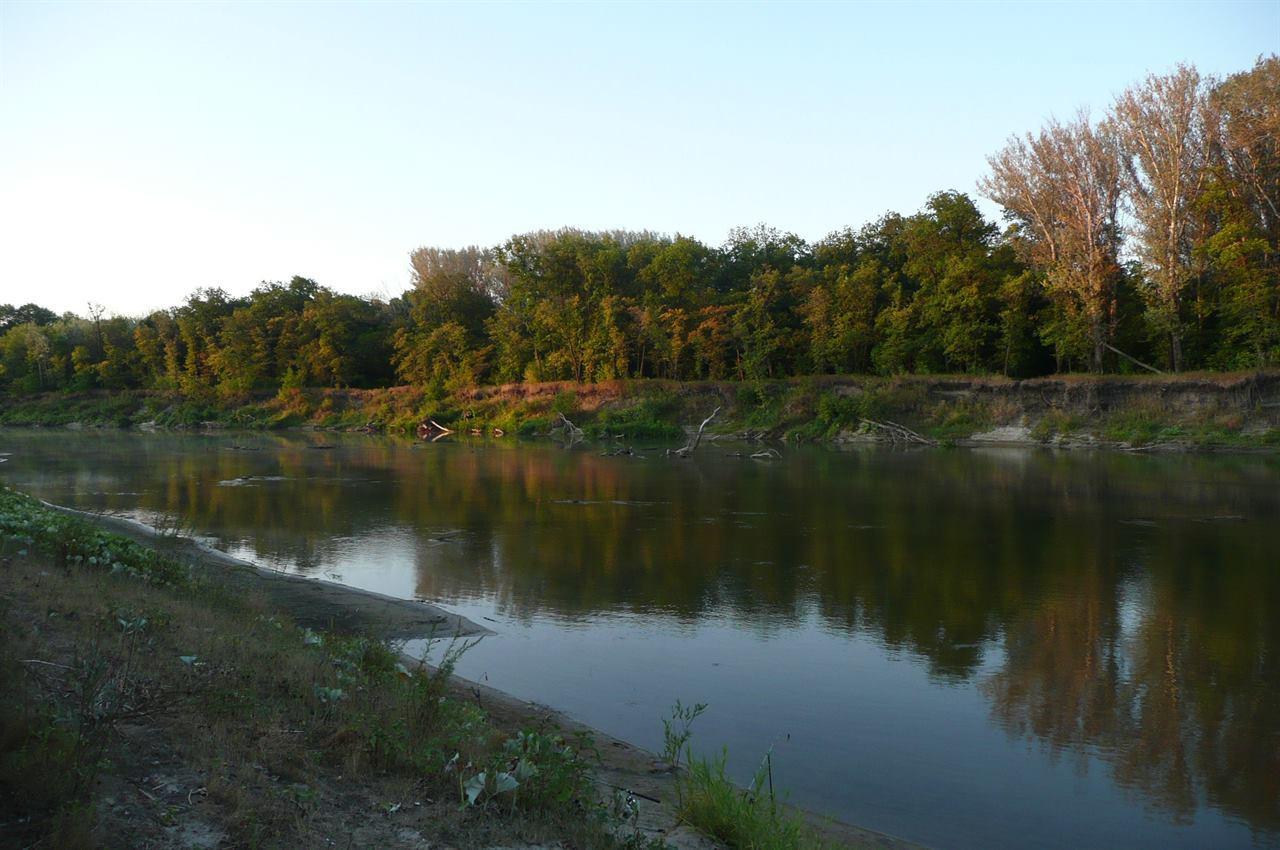 Речка и деревья на берегу