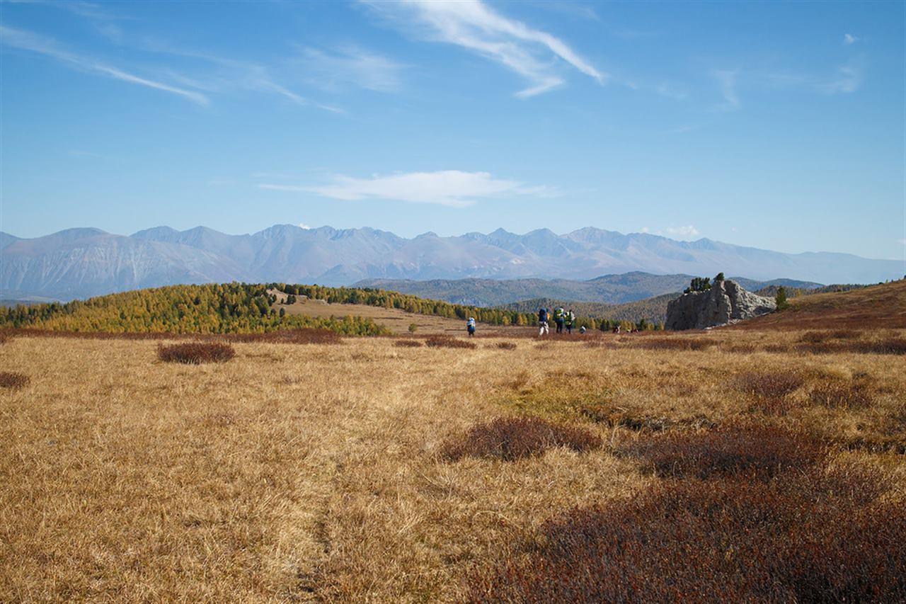Просторные поля на Алтае