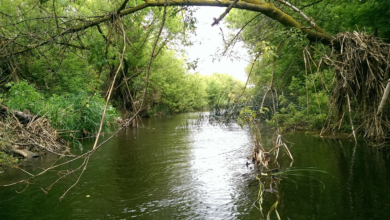 Сплав по тихой лесной речке