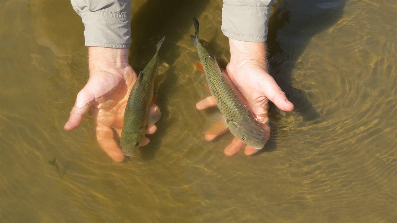 Пойманные рыбы на сплаве