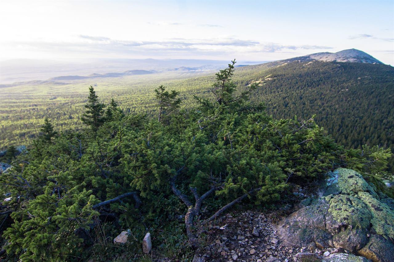 Тайга и горы Урала