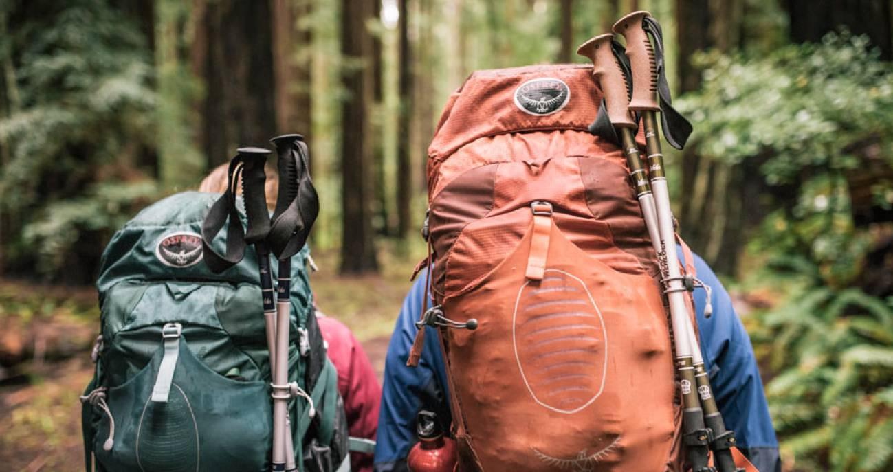Начинающие туристы в лесу путешествуют с большими рюкзаками