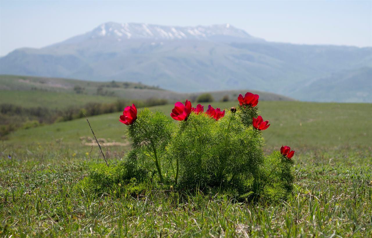 Горные цветы в путешествии