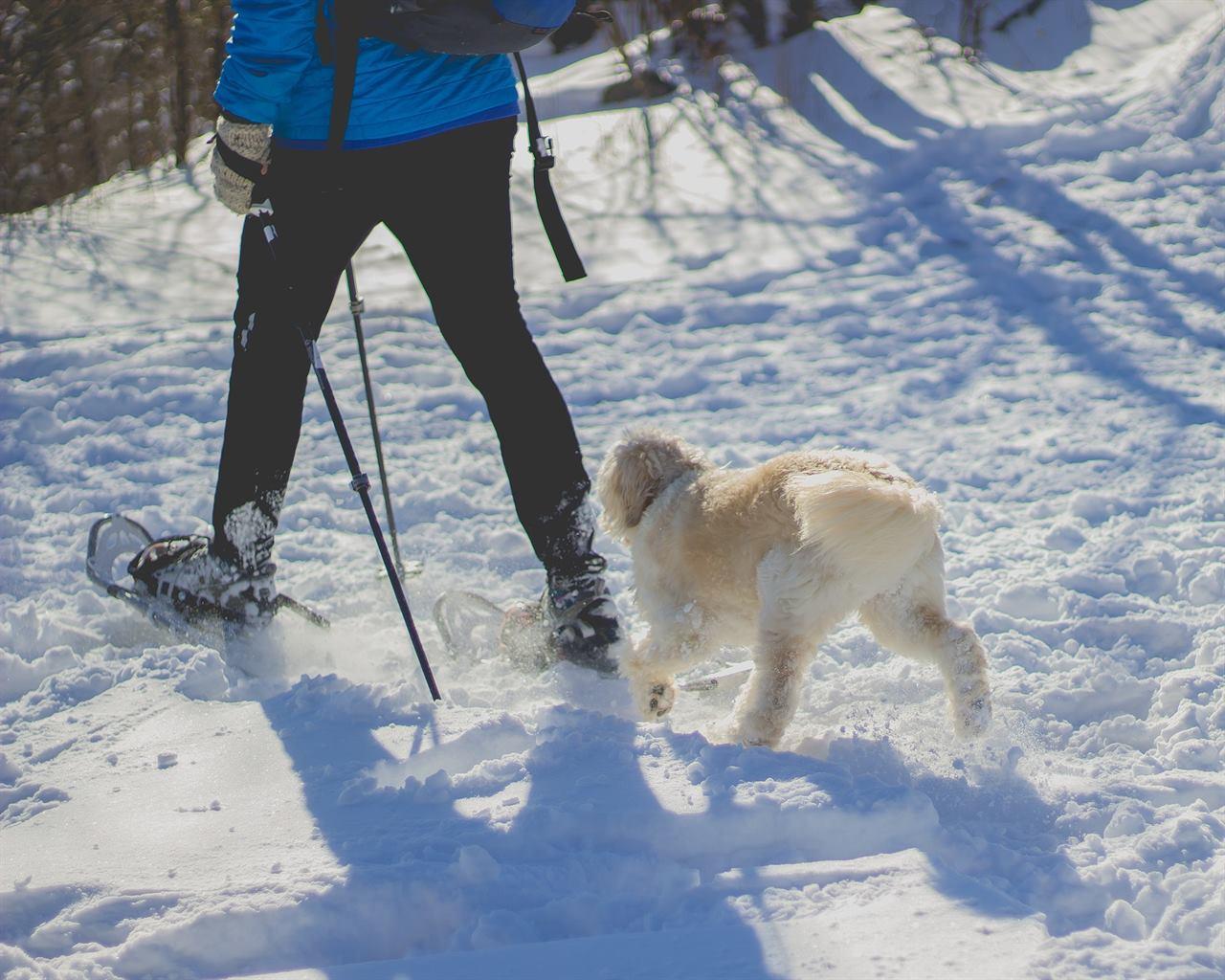 Зимний туристический поход с собакой