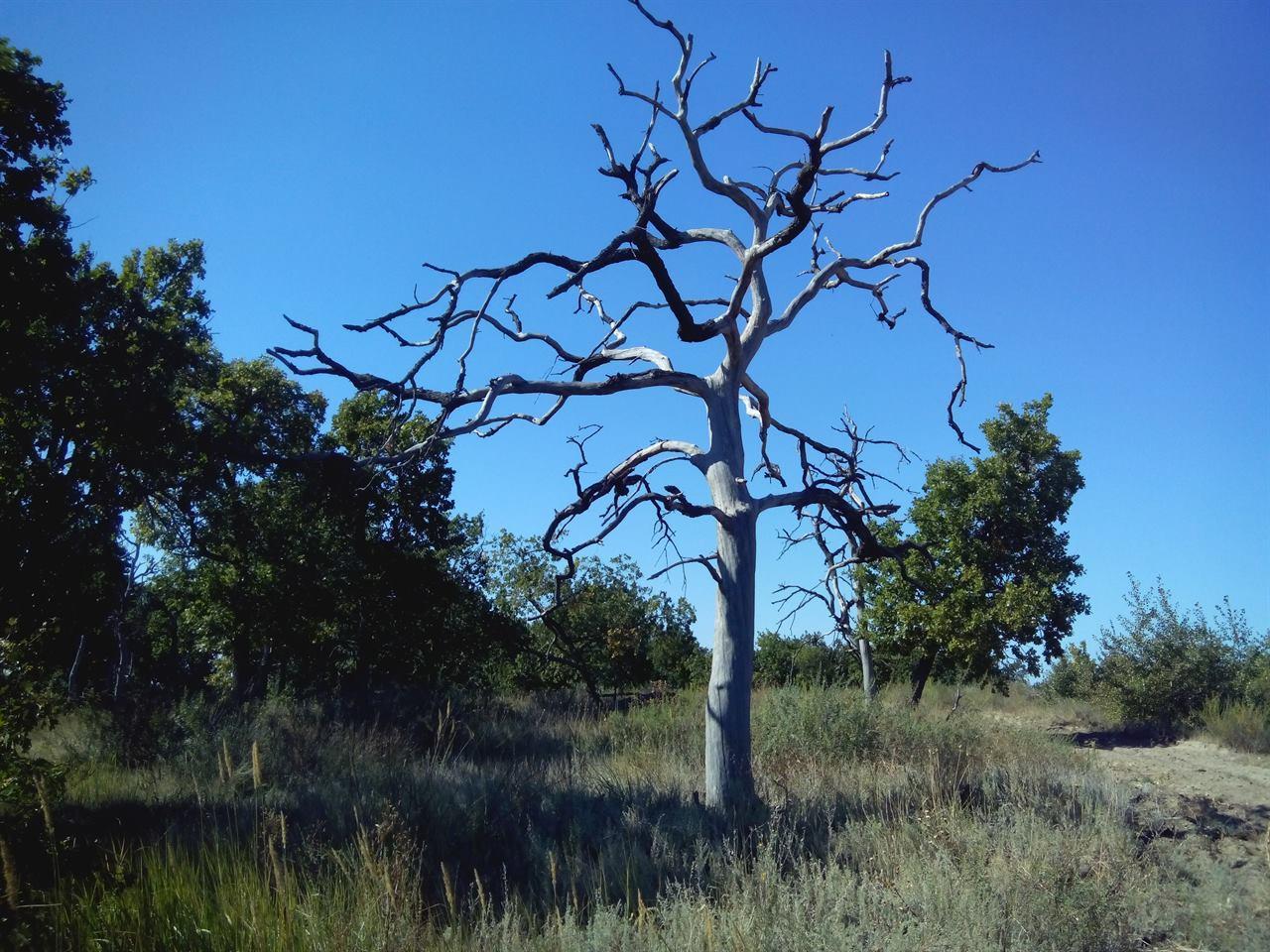 Волгоградские деревья