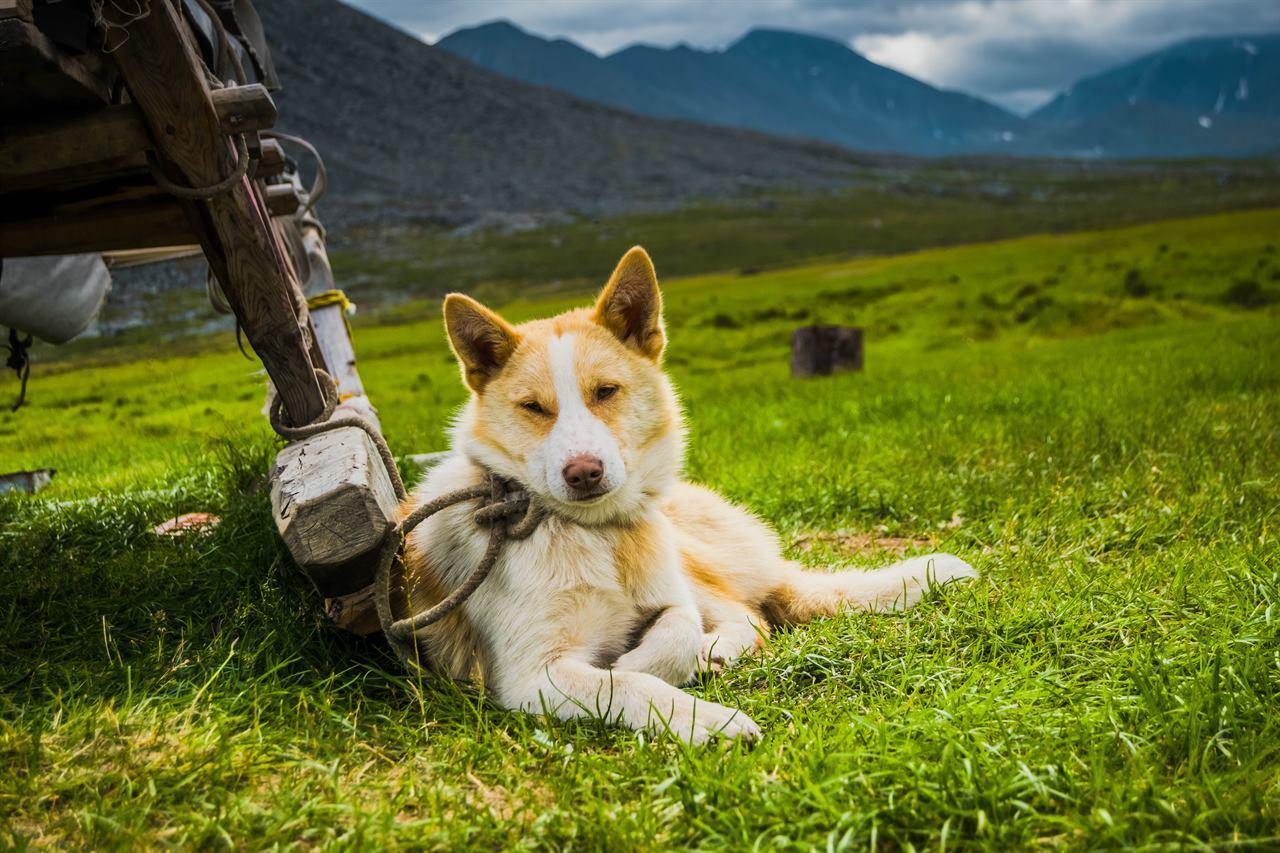Собаки на Северном Урале