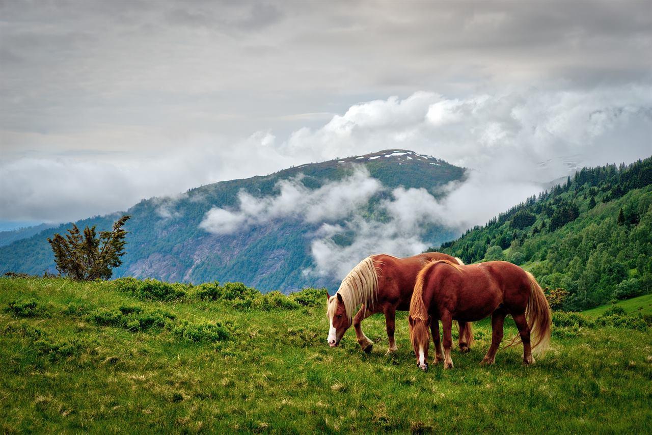 Лошади в природе