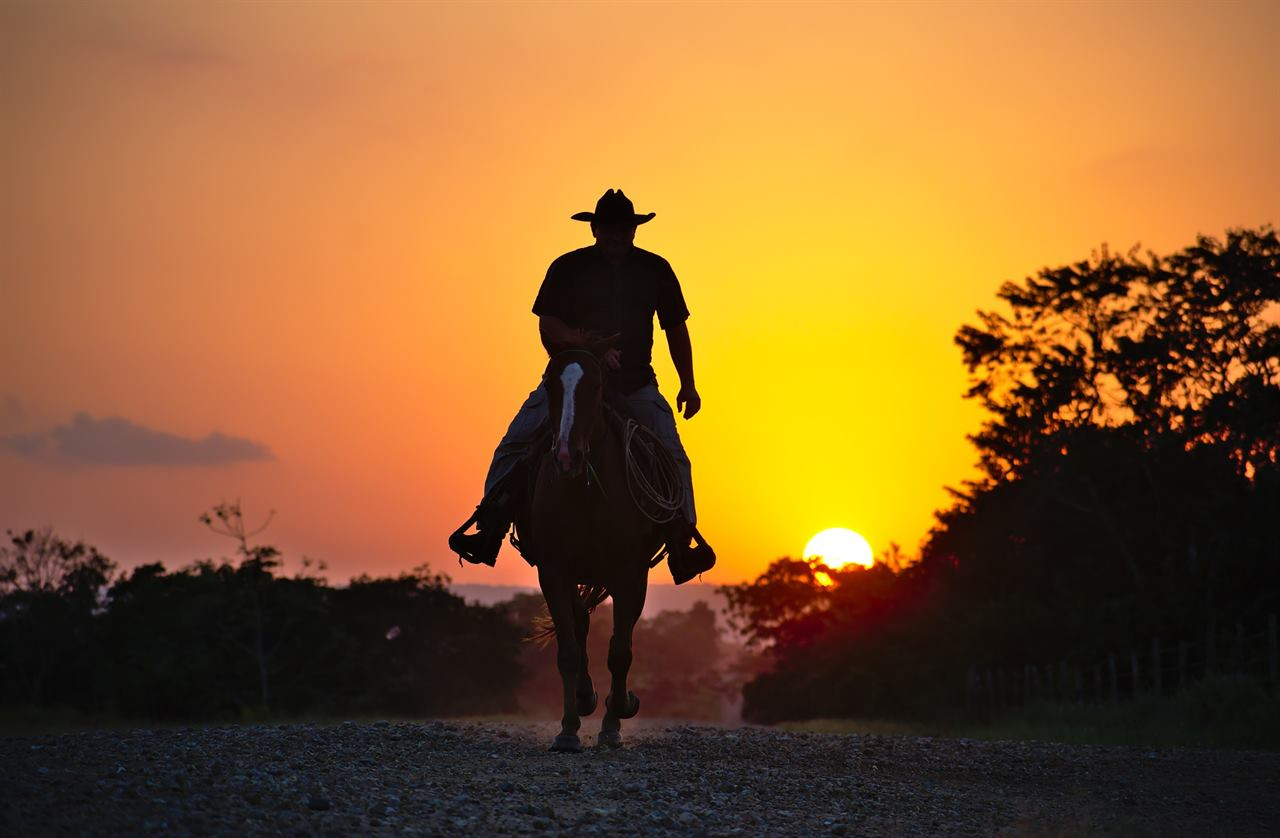 Всадник на лошади в закате