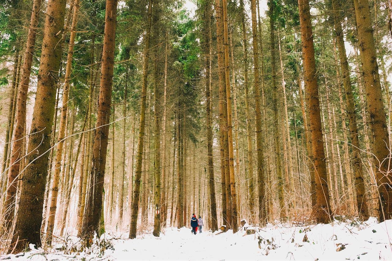 Путешествие зимой по лесу