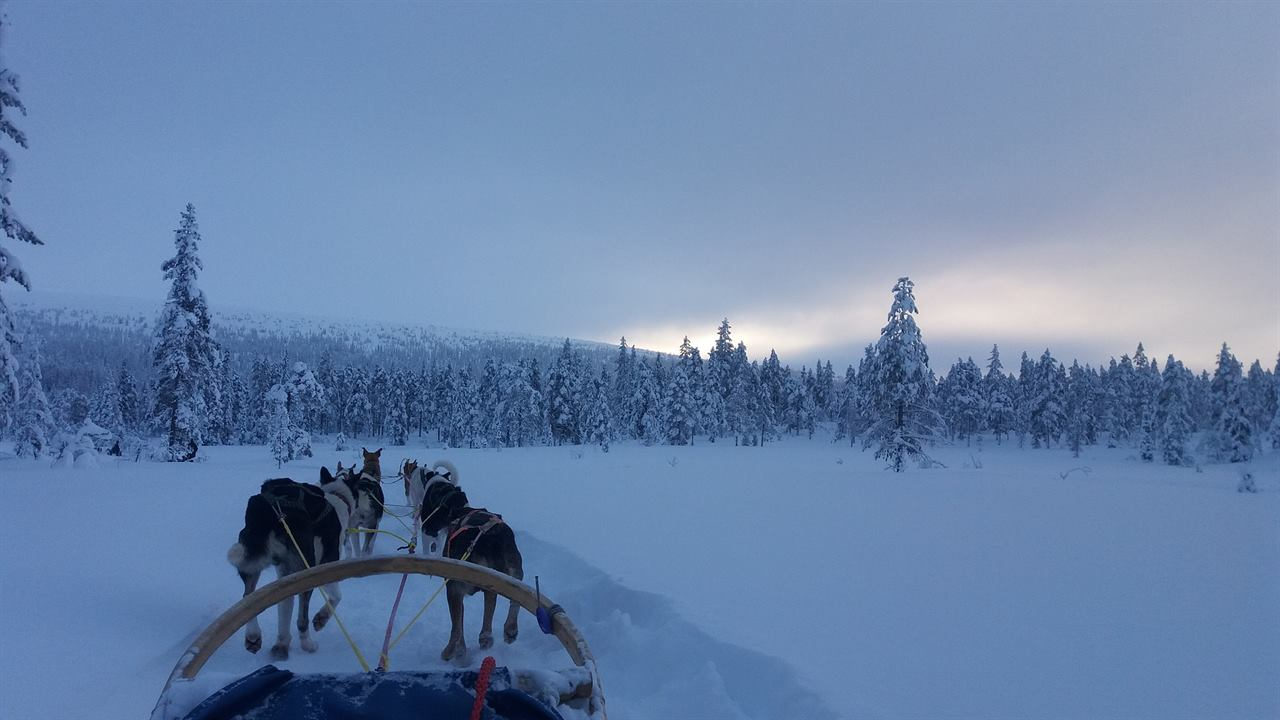 Конный туризм на санях зимой в лесу