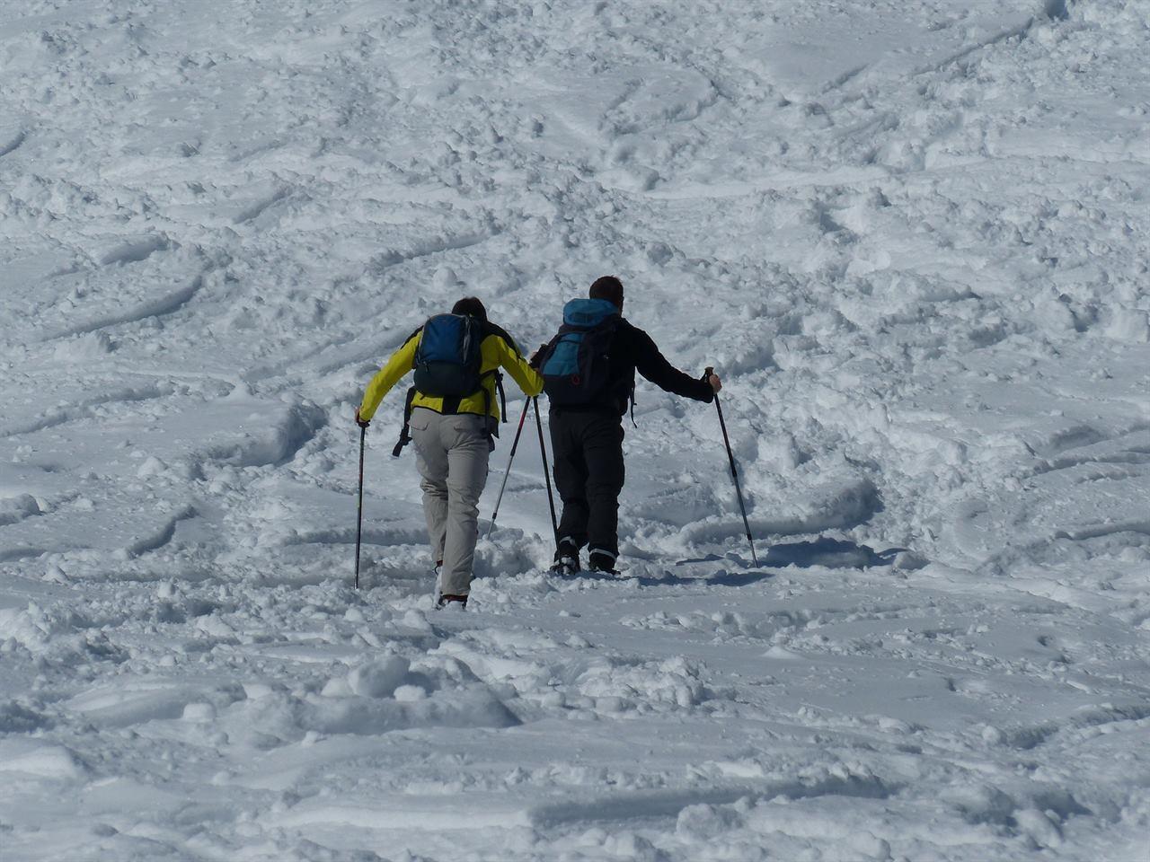 Туристы путешествуют по зимнему лесу