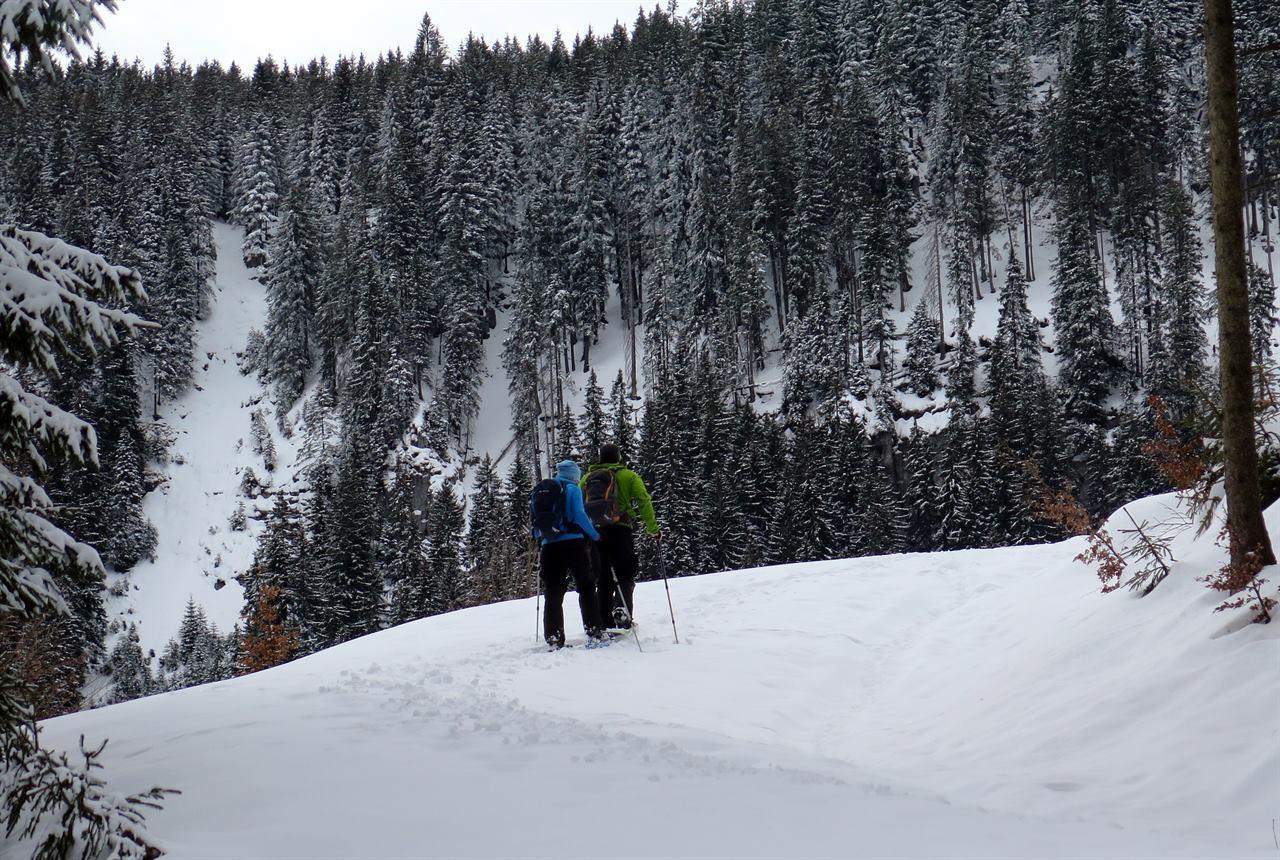 В лесу поход по снежным горам