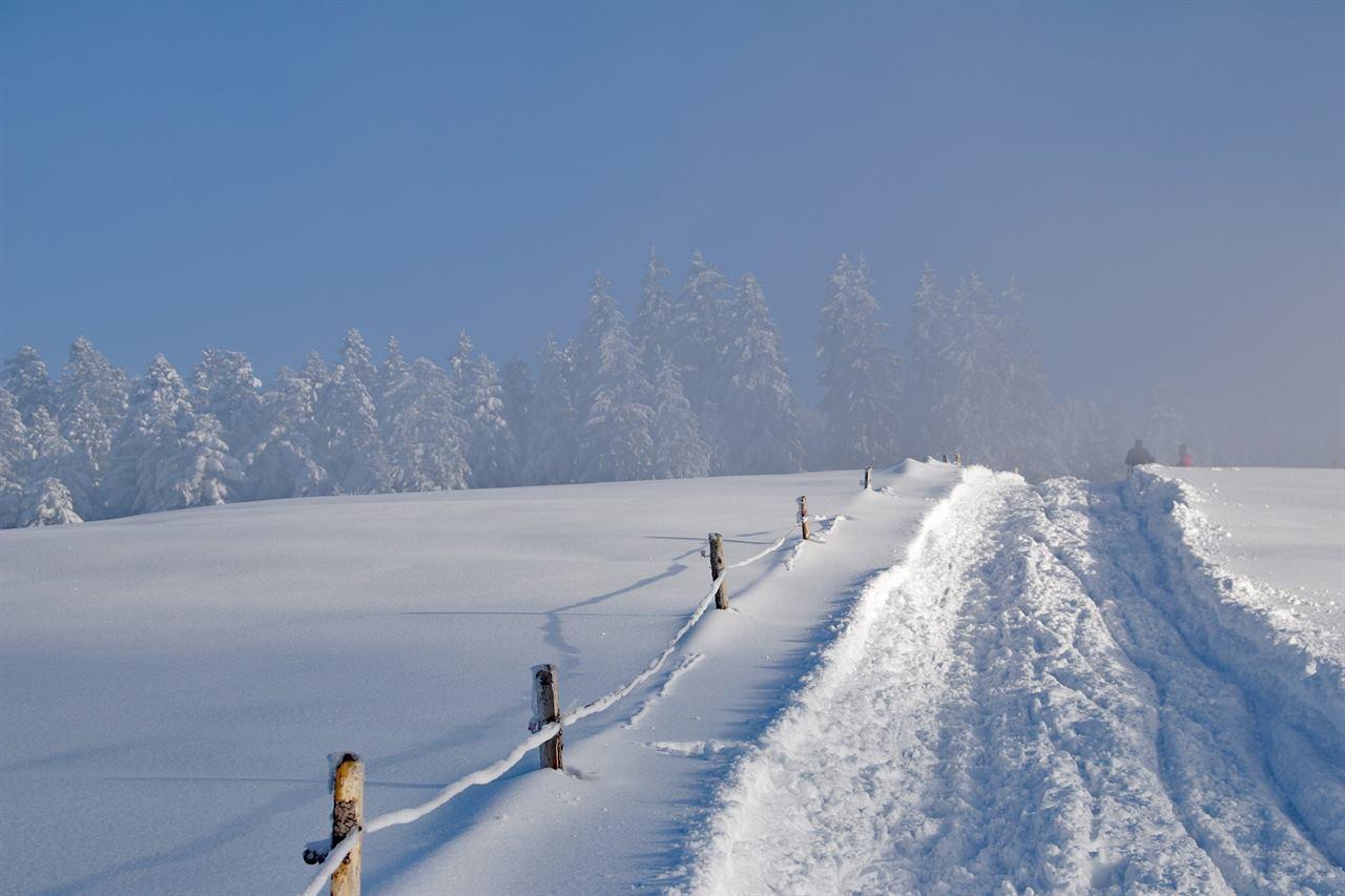 Зимняя дорога в лес