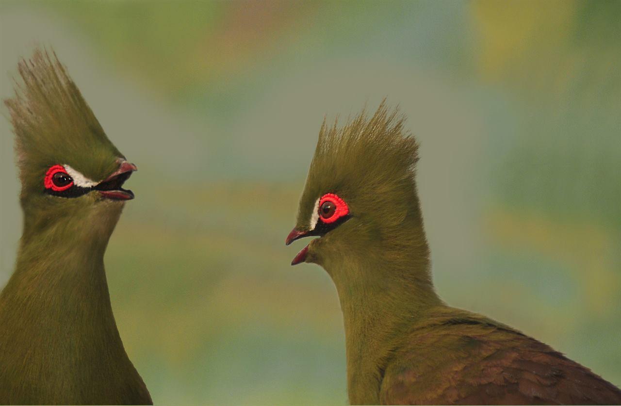 Сотни экзотических птиц