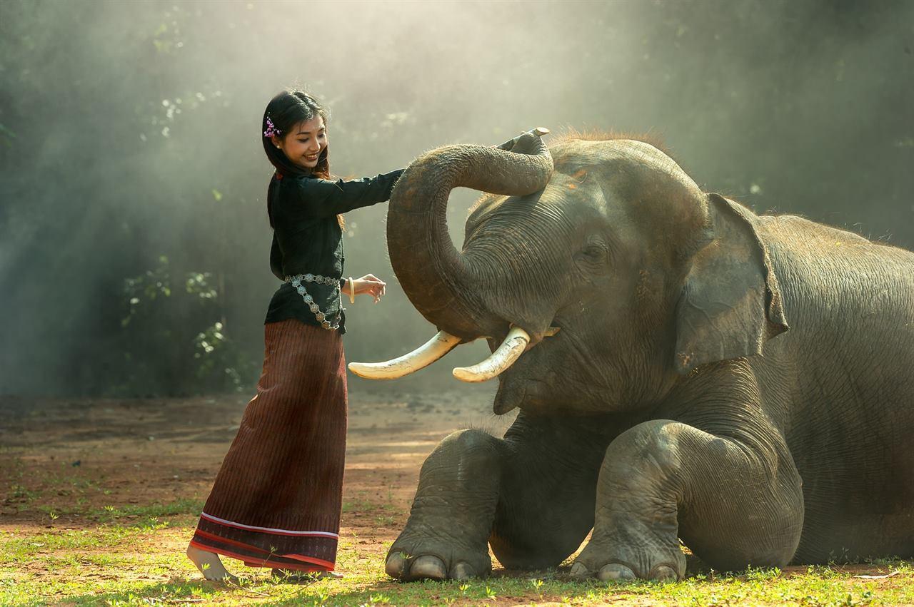 Потрогать слона на Бали