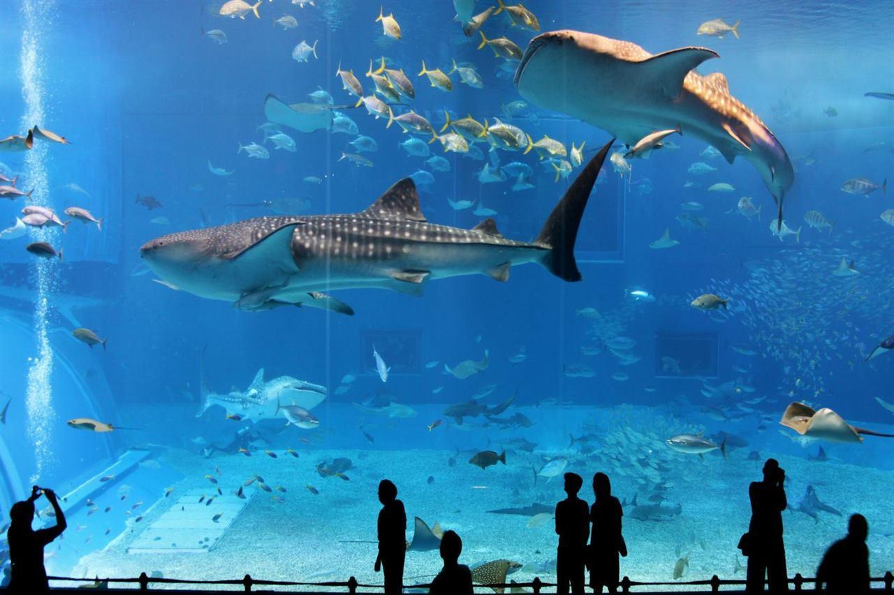 Океанариум Осака