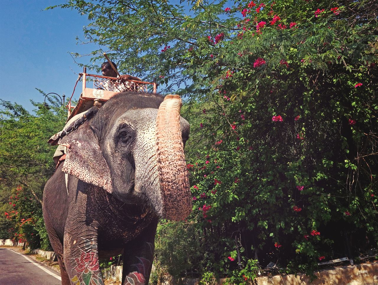 Катание на суматранских слонах на острове Бали