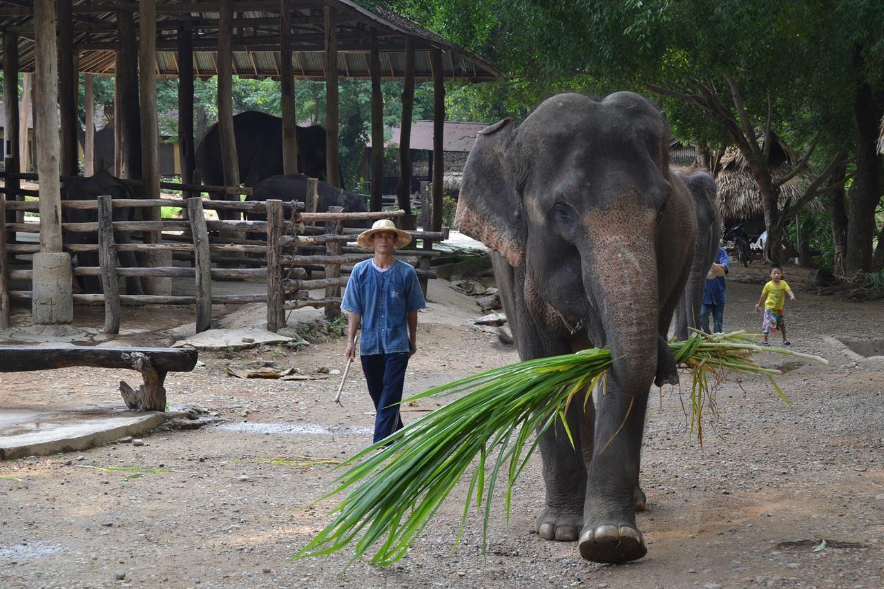 Балийский слон
