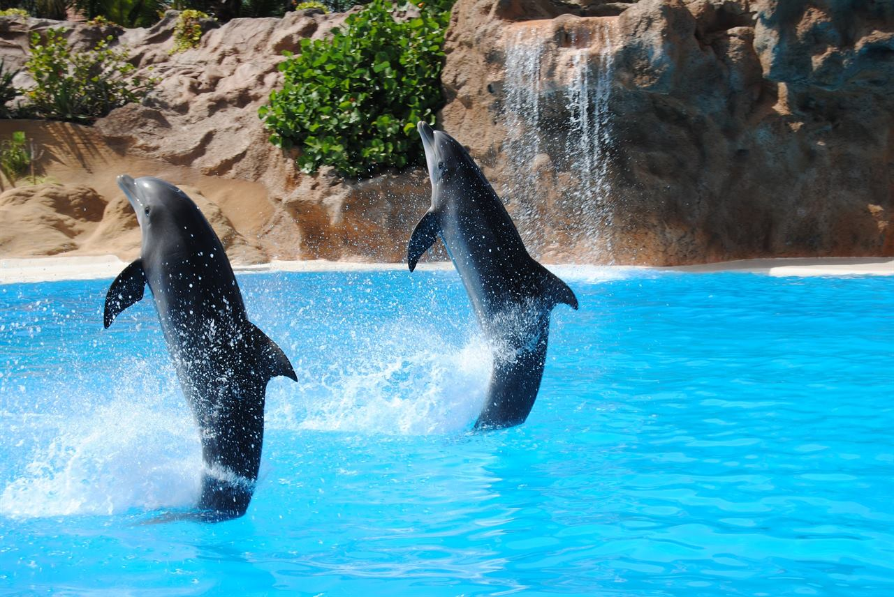 Дельфинарий, расположенный в открытом океане
