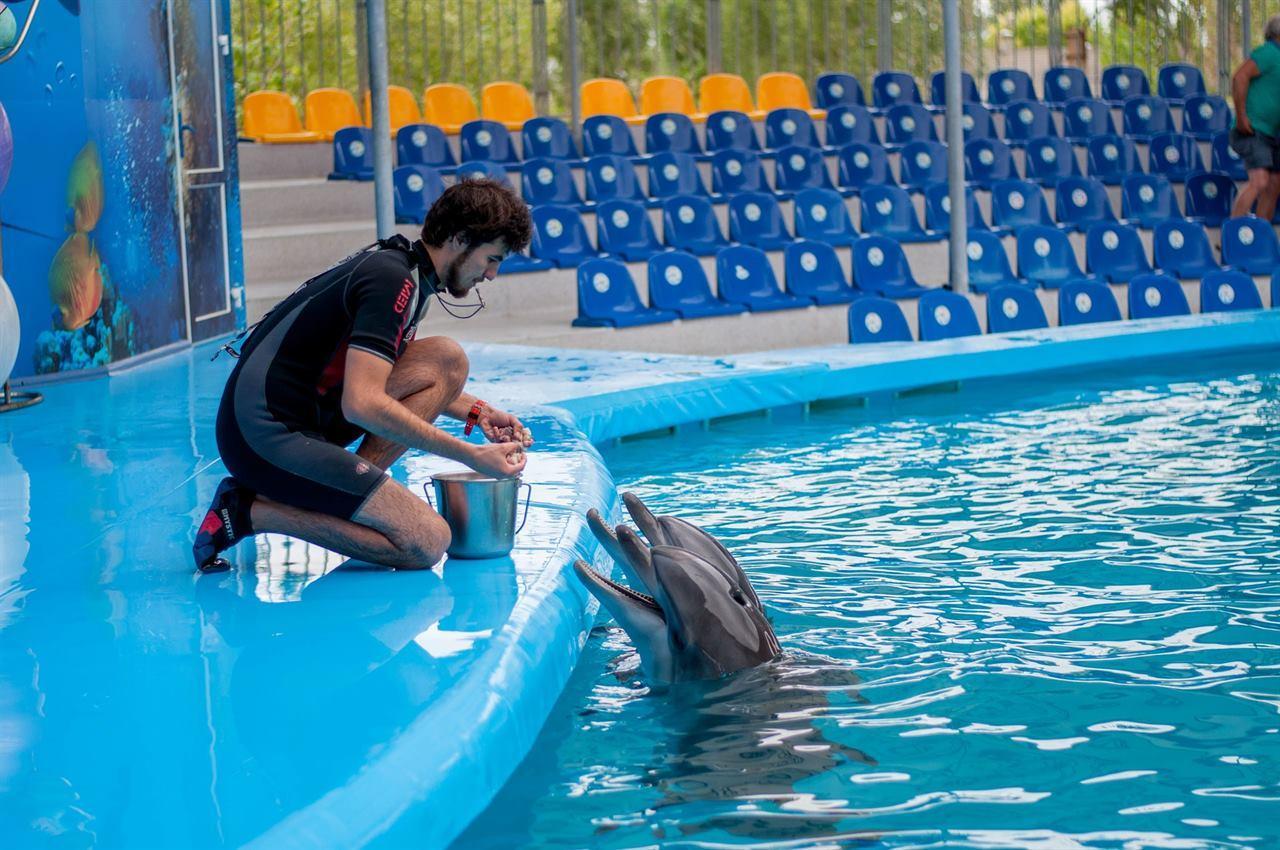 Кормление дельфинов на острове Бали