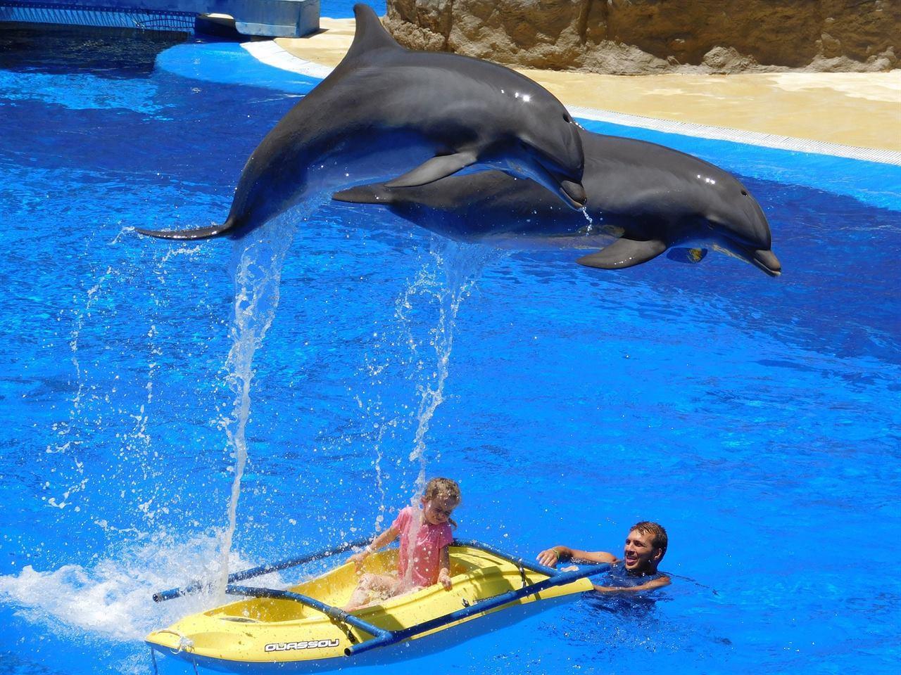 Балийские дельфины в бассейне